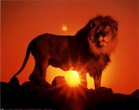 Sana dottina conferenze e predicazioni del fratello eliseo - Uomo leone a letto ...