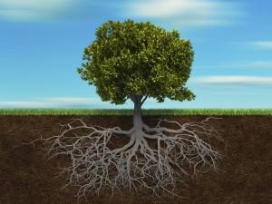 Frane-e-inondazioni-ora-si-combattono-rinforzando-le-radici-delle-piante