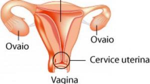 cervice-uterina-480x270