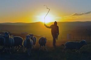 Pastori-Shepherd-Pastore